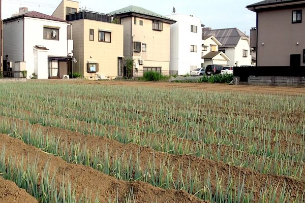 Asaka Farm 600x400 - Japan-related news from Shingetsu News Agency